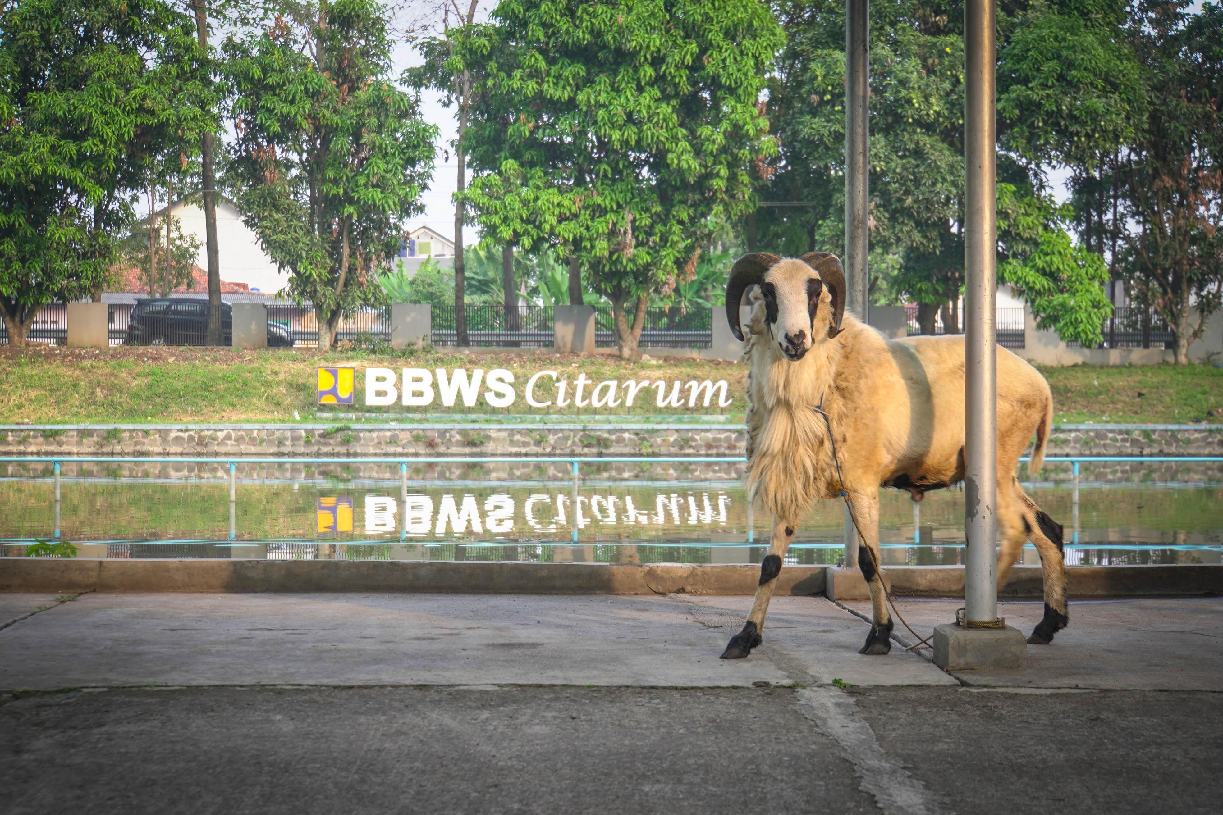 Pelaksanaan Kurban di Lingkungan Balai Besar Wilayah Sungai Citarum