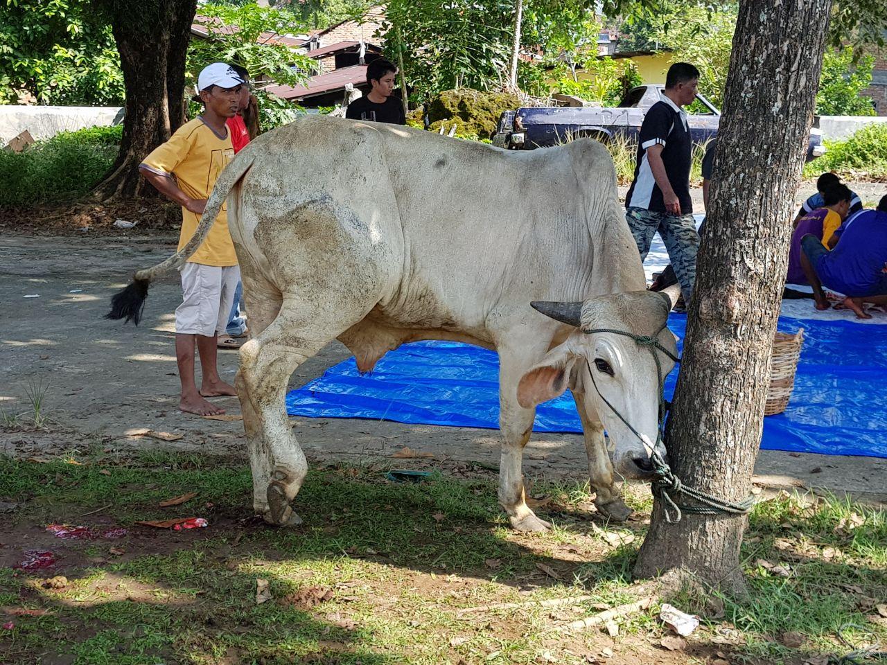 Hari Raya Qurban di Lingkungan Balai Wilayah Sungai Sumatera V