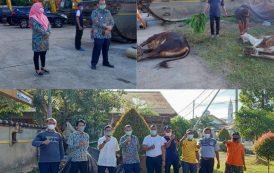 Pemotongan Hewan Qurban Idul Adha 1442 H di BWS S V Padang